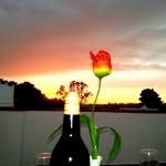 Flor y vino
